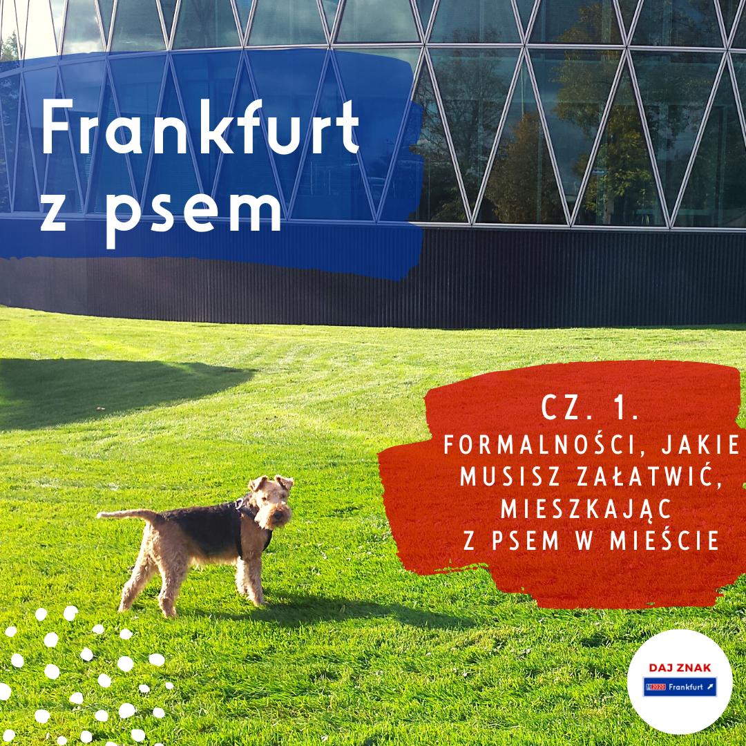 Z psem we Frankfurcie - formalności